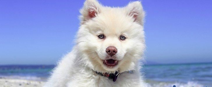 تفسير حلم رؤية الكلب 2018 فى المنام