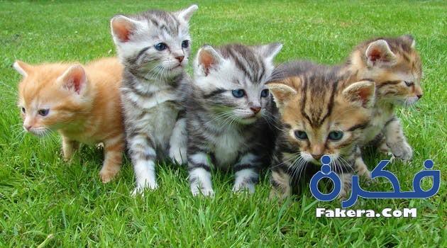 979859791 تفسير رؤية القطط في المنام موقع فكرة