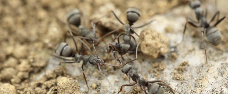 تفسير حلم رؤية النمل في المنام 2018 بالتفصيل