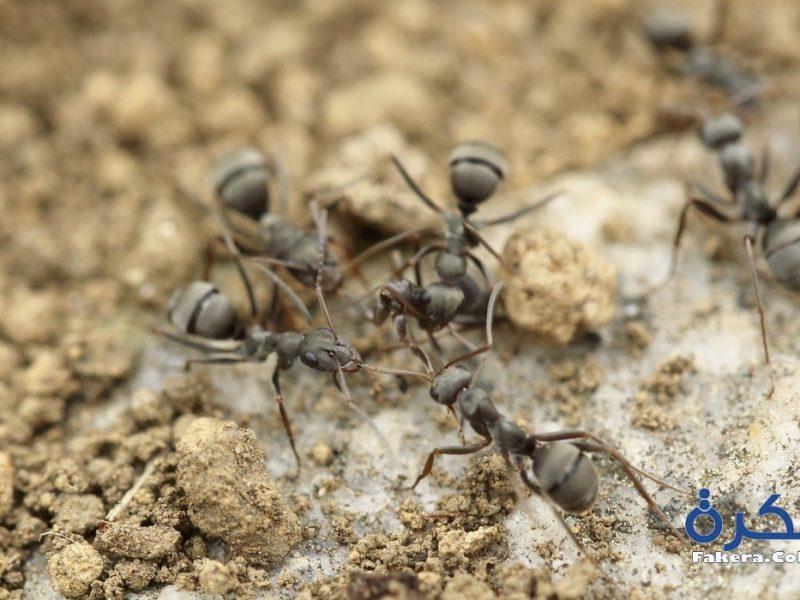 تفسير حلم النمل في المنام