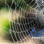 تفسير حلم العنكبوت في المنام