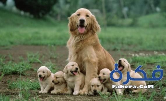 اسماء كلاب جديدة 2019 mother-dog-sitting-w