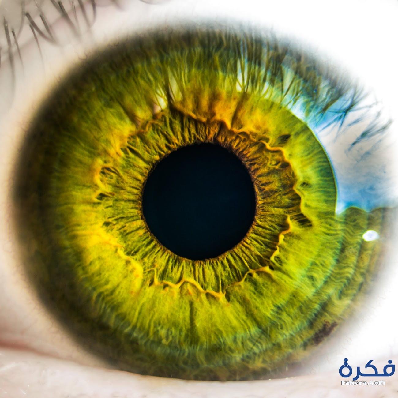 بوستات للعين