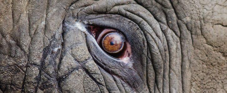 تفسير حلم رؤية حيوان غريب 2018 في المنام