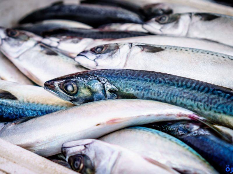 تفسير حلم السمك 2019 في المنام