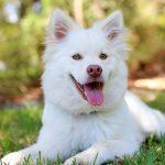 تفسير حلم رؤية الكلاب لابن سيرين