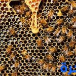 تفسير حلم رؤية النحل