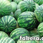 تفسير حلم البطيخ فى المنام