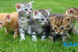 تفسير رؤية مطاردة القطط في المنام