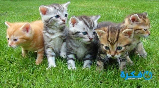 4e4068ea7 تفسير رؤية مطاردة القطط في المنام موقع فكرة