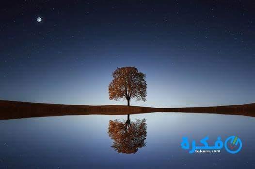 تفسير حلم تحول النهار الى ليل في المنام