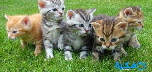 حلمت بقطط صغار