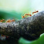 تفسير حلم رؤية النمل في المنام