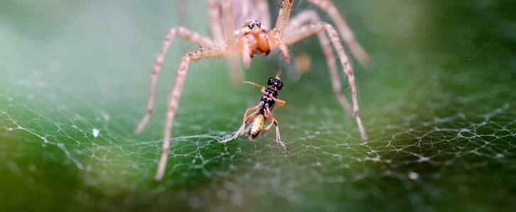 رايت عنكبوت في الحلم