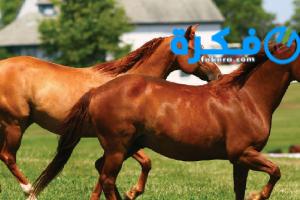 تفسير رؤية الحصان البني في المنام