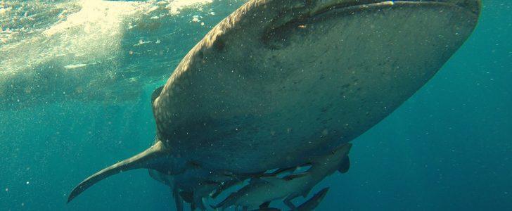 تفسير حلم رؤية سمك القرش
