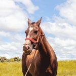 تفسير رؤية الحصان في المنام