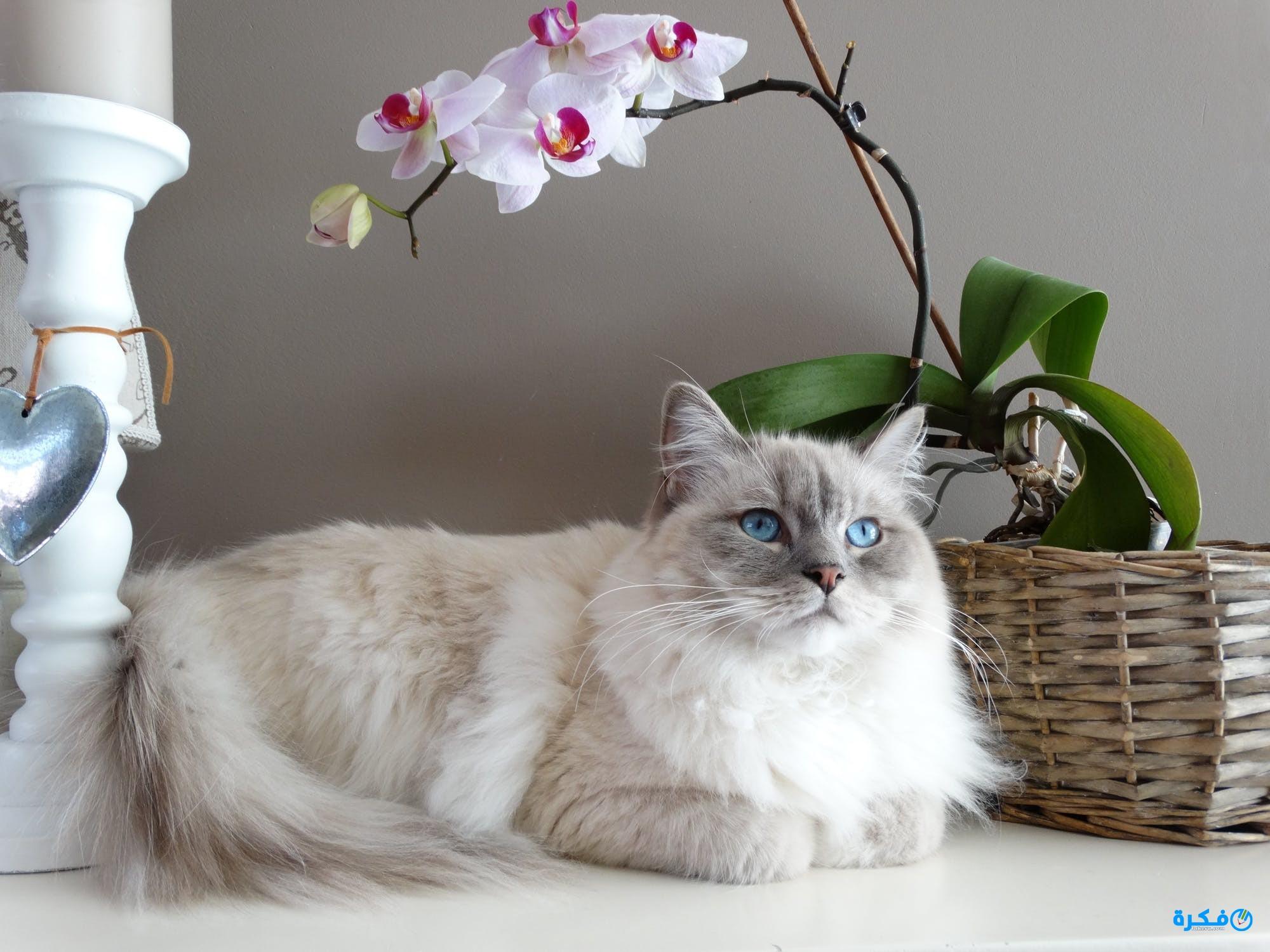 القط في الحلم