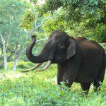 تفسير رؤية فيل في المنام
