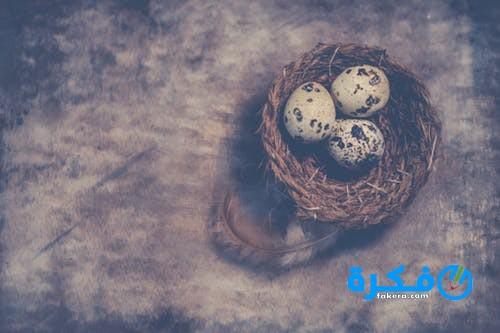 فوائد بيض السمان