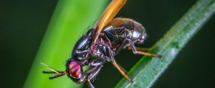 تفسير حلم رؤية الحشرات