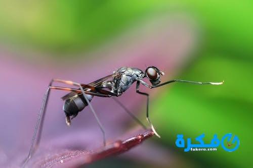 تفسير حلم رؤية البعوض ( الناموس )