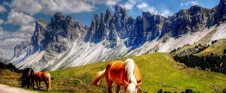 تفسير حلم رؤية الخيل ( الحصان )