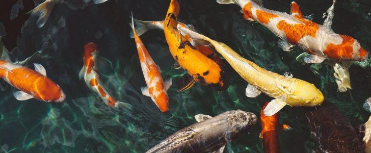تفسير حلم صيد القراميط