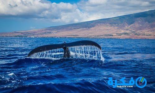 تفسير حلم رؤية الحوت