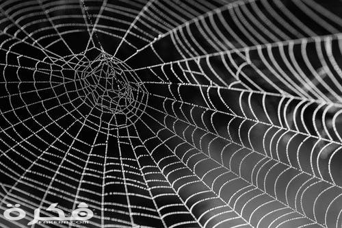 تفسير حلم قتل العنكبوت في المنام
