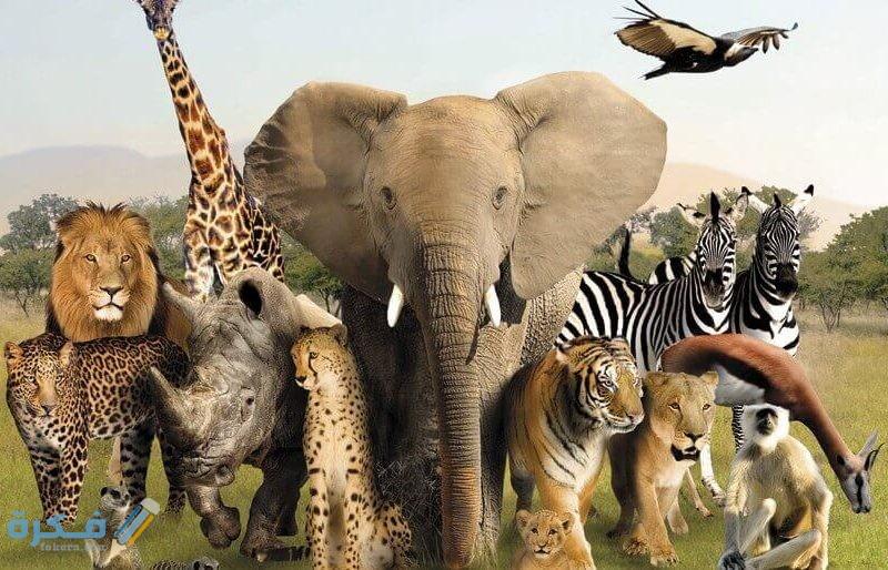 فقرة هل تعلم عن الحيوانات للإذاعة المدرسية