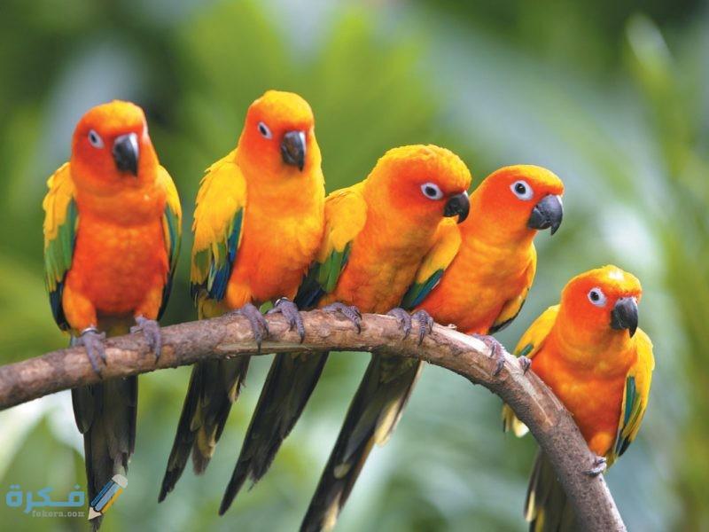 اجمل صور عصافير 2021