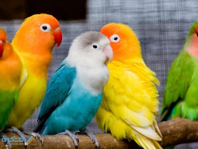 تفسير رؤية الطيور الملونة في الحلم موقع فكرة