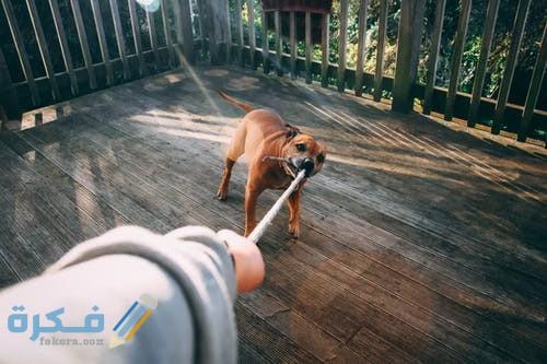 تفسير حلم كلب يعض يدي في المنام موقع فكرة