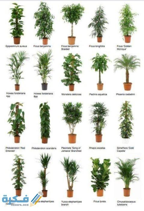 سرادق حساسية جانب نباتات الظل Sjvbca Org