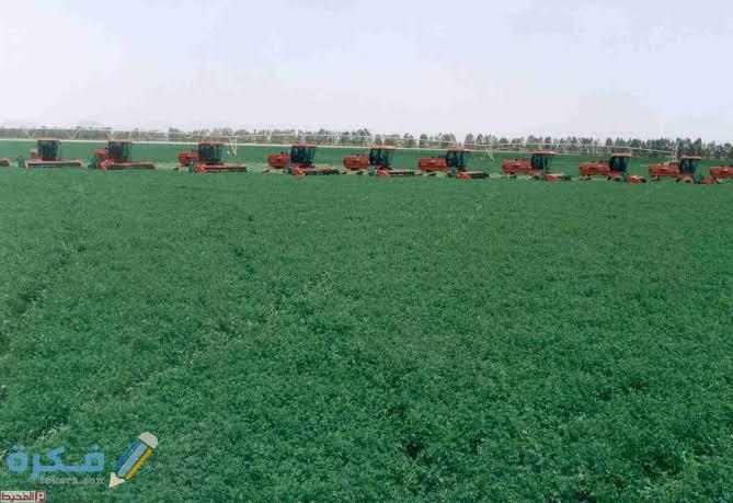 المحاصيل الزراعية في المملكة العربية السعودية