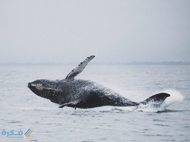 تفسير حلم رؤية الحوت للمتزوجة موقع فكرة