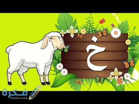 اسم حيوان بحرف خ الخاء - موقع فكرة