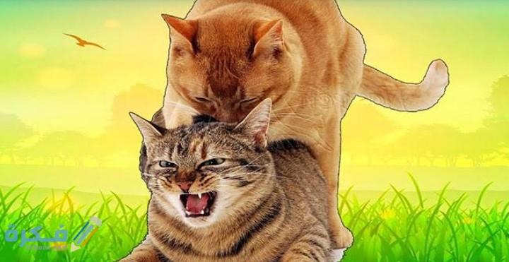 لماذا تبكي القطط اثناء التزاوج
