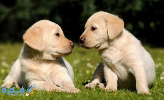 افضل انواع الكلاب الصغيرة للتربية في المنزل بالصور موقع فكرة