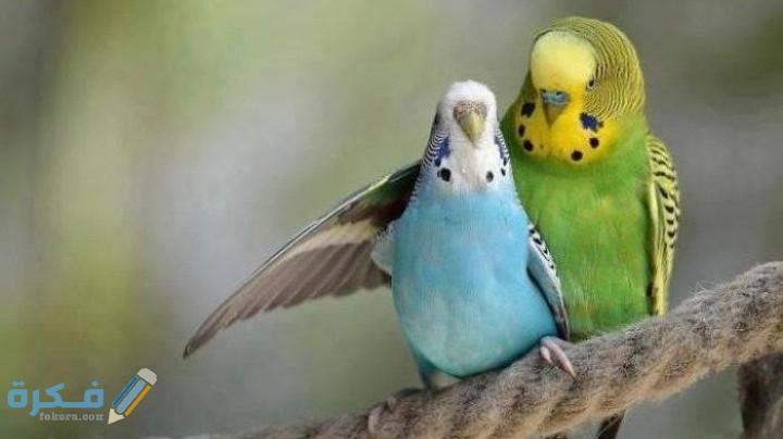 انواع العصافير بالصور