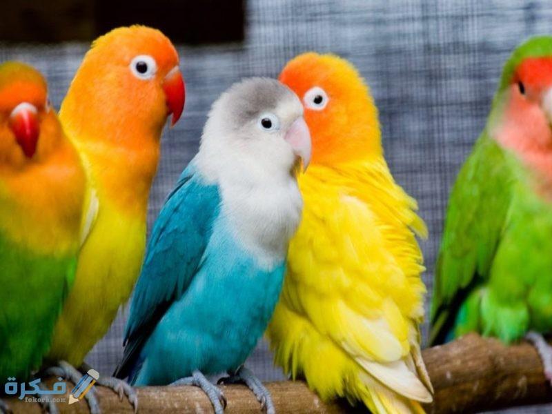 اسماء افضل انواع الطيور للتربية المنزلية