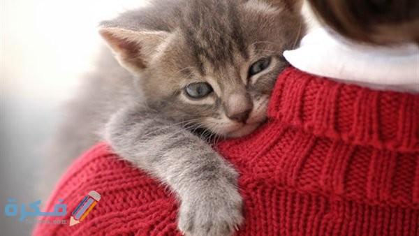 ما حكم تربية القطط في المنزل