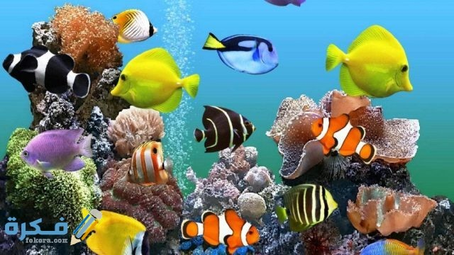 انواع اسماك الزينة في مصر