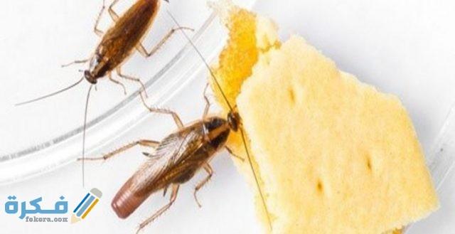 اضرار وجود الحشرات في المنزل