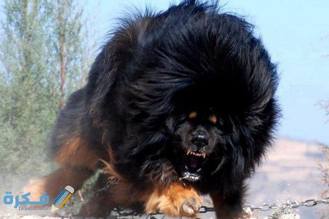 الكلب القوقازي