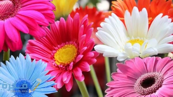 أشهر أنواع الزهور
