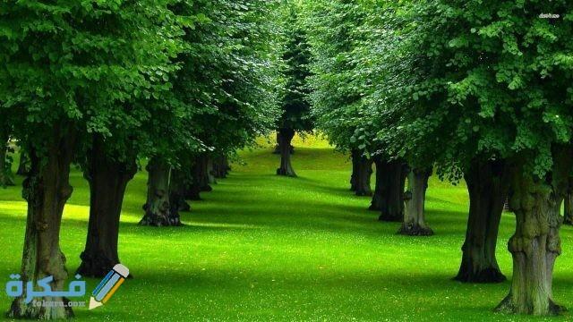 مكونات الأشجار الأساسية