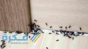 أسباب وجود النمل في المنزل