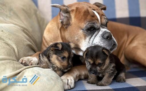مدة حمل الكلب